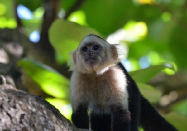 -guacalillo-eco-jungle-2844.jpg