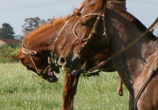 gaucho-auf-seinem-pferd