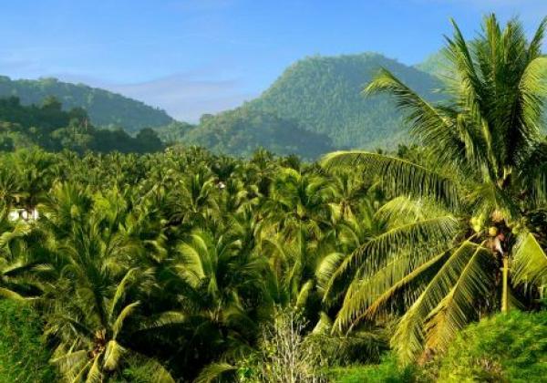laos-nature