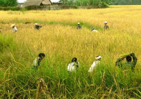 laos-nature1