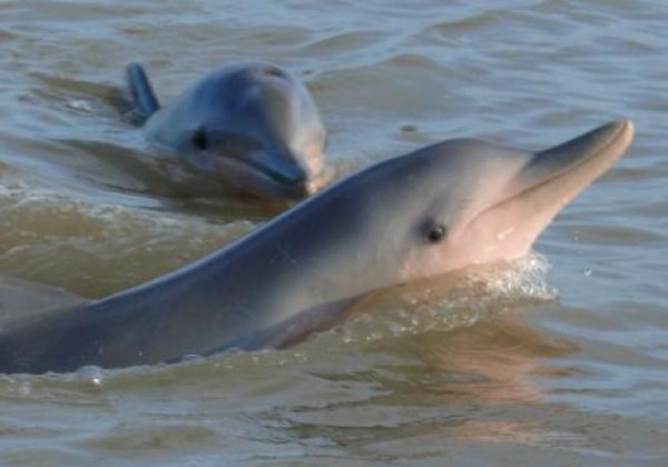 sunset-und-dolphins-trip.jpg