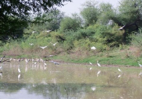 bird-sanctuary-1.jpg