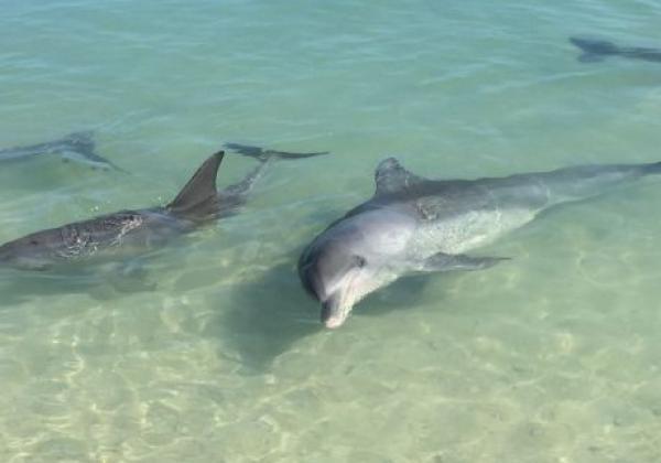 delfinfuetterung--0307.jpg