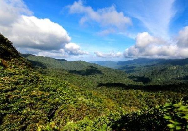 monteverde-nebelwald