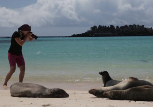 galapagos-sea-lion-21