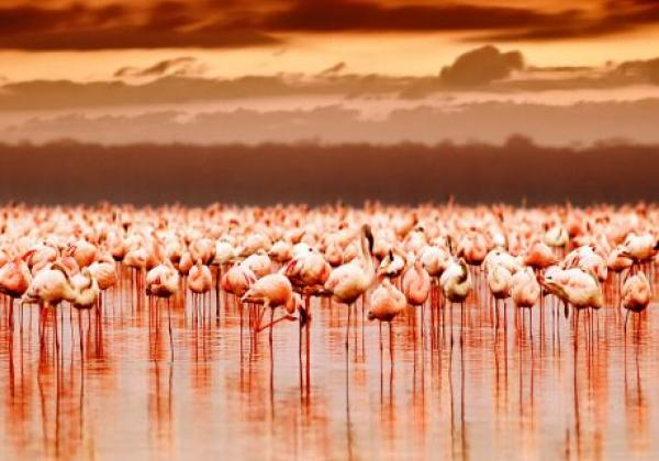 tanzania---lake-manyara---flamingos