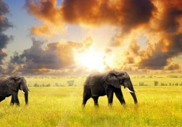 tanzania---serengeti---elefant-clouds