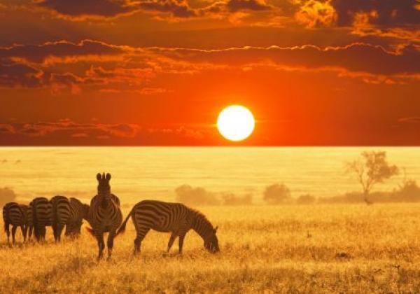 tanzania---serengeti---zebra-red