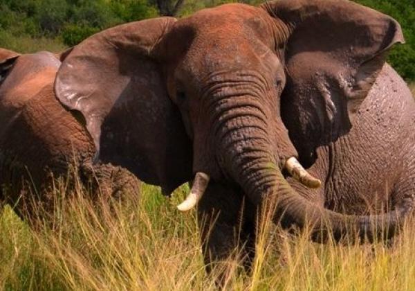 iyt---uganda---murchison---elefant---mud-b