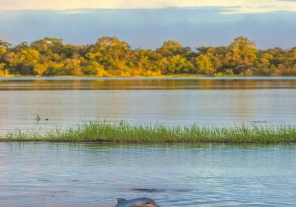 delfin-im-amazonas