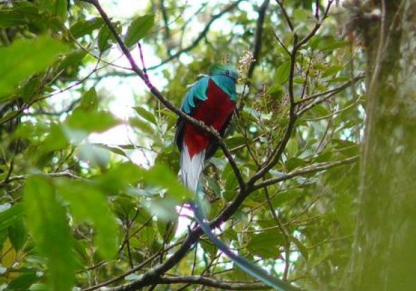 boquete-vogel