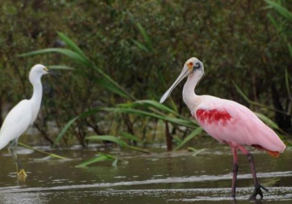 vögel-in-costa-rica