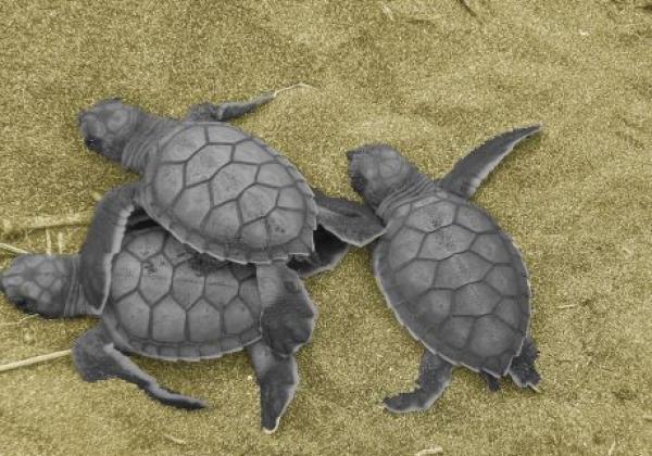 schildkröten-am-strand