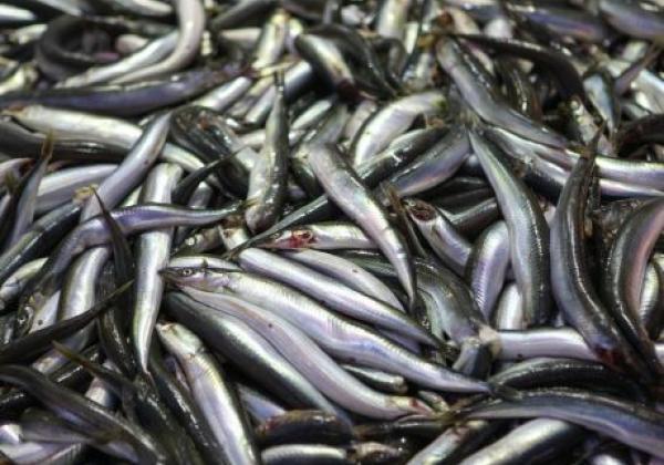 3012007201312001k-sokcho-tour-fisheries-market-(jungang-market)