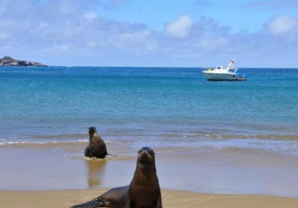 galapagos-sea-lion-7.jpg