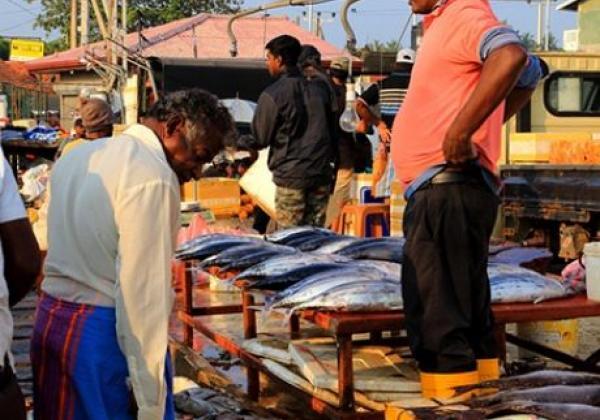 fish-market---negombo