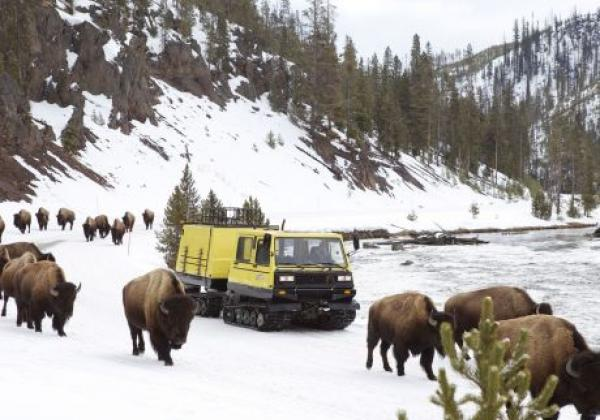 yellowstone-snow-coach-2