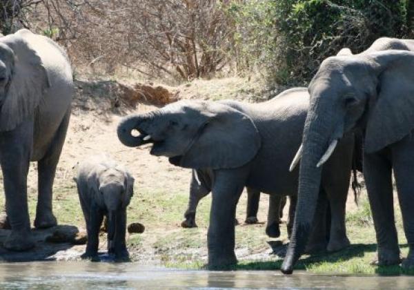elefanten-am-wasserloch