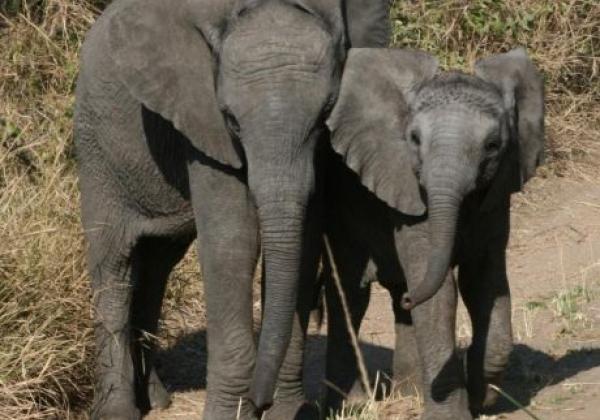 großer-und-kleinerer-elefant