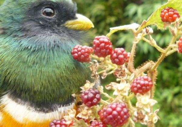 vogel-in-panama