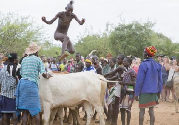 hammer-bull-jumping