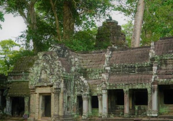 cambodia-siem-reap-ta-prohm.jpg