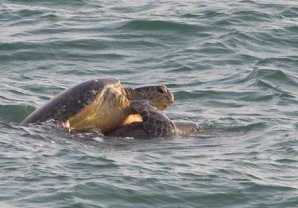 rekawa-turtle-2