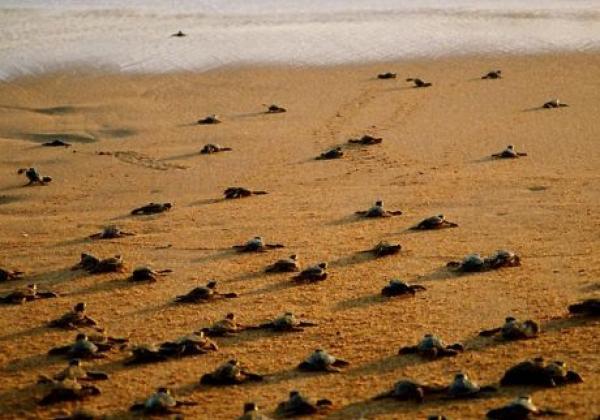 rekawa-turtle-3