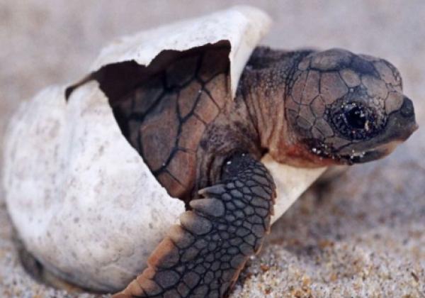 rekawa-turtle-1
