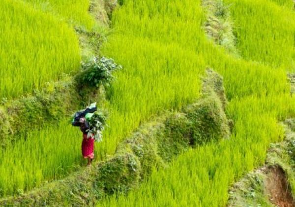 felder-in-nepal