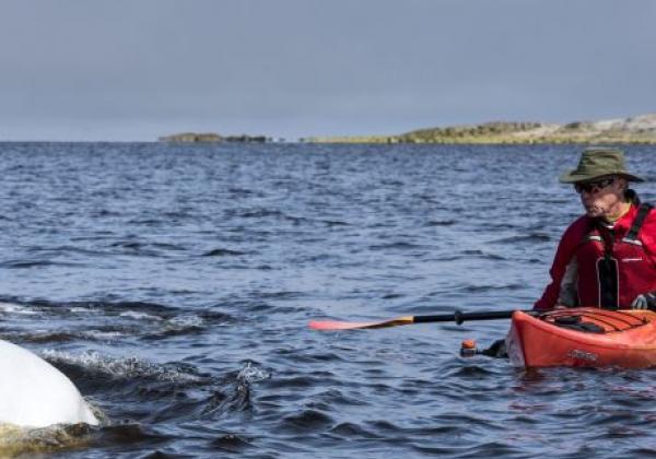 kayaking-with-beluga-whales-churchill-river-7