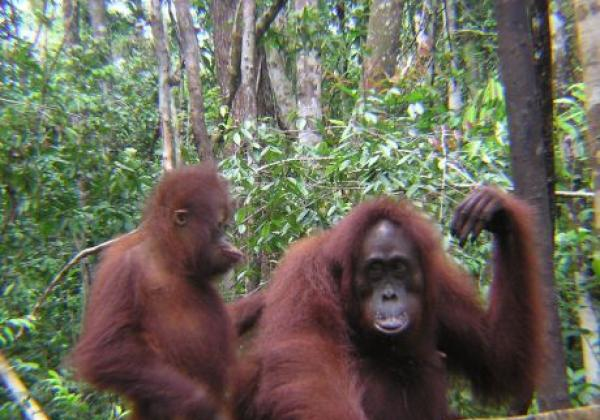 borneo---mom-and-baby-orangutan