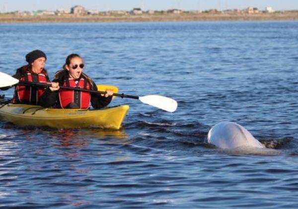 kayaking-with-belugas-lb-1.jpg