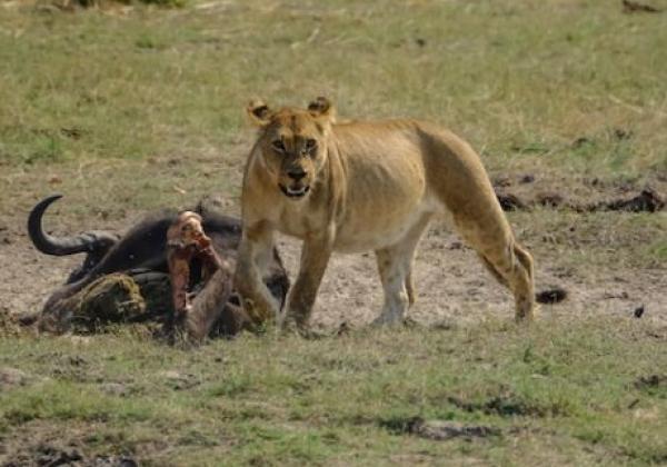 gefuerte-namibia-botswana-tour-(32-von-68)