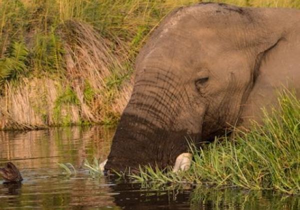 gefuerte-namibia-botswana-tour-(61-von-68)