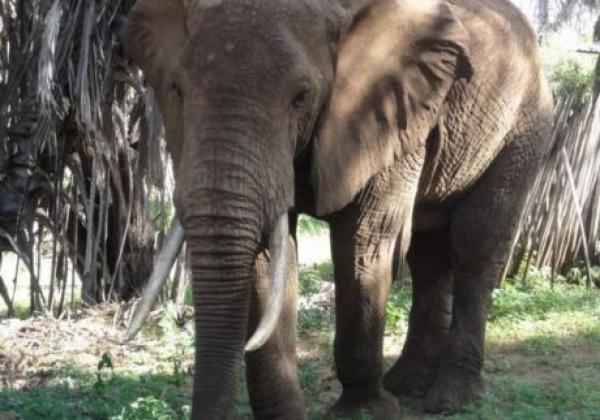 elefant-in-kenia.jpg