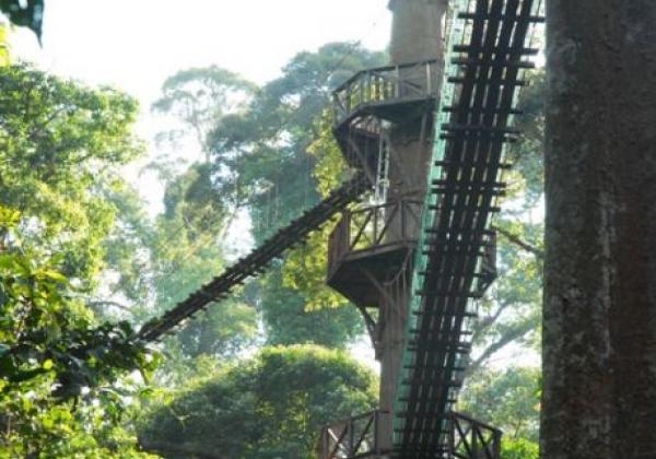 canopy-walkway-(2)