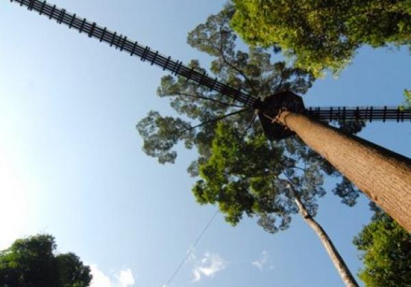 canopy-walkway-(3)