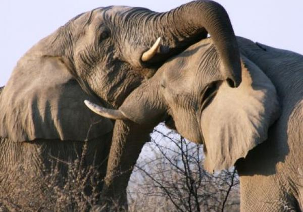 wildlife-(11).jpg