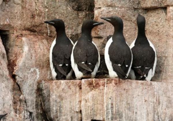 rich-birdlife-(1)