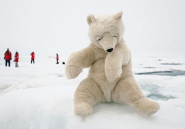 north-pole---polar-bear-(4)