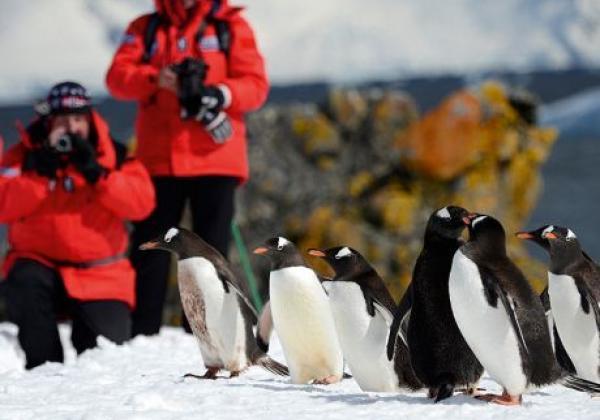 antarctic-(2)