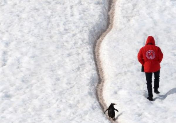 antarctic-(3)