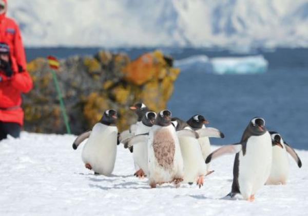 antarctic-(5)