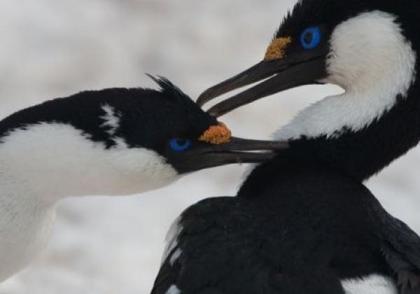 antarktis-vögel.jpg