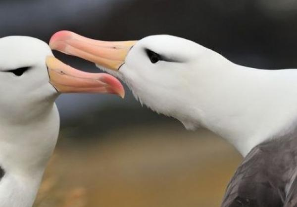 2-albatrosse.jpg
