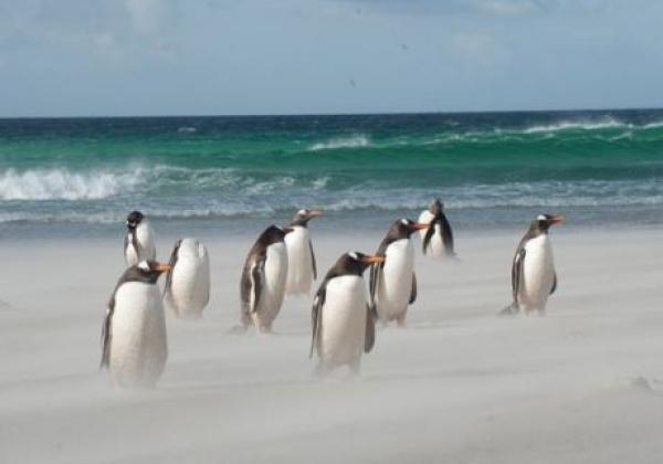 pinguine-im-wind.jpg