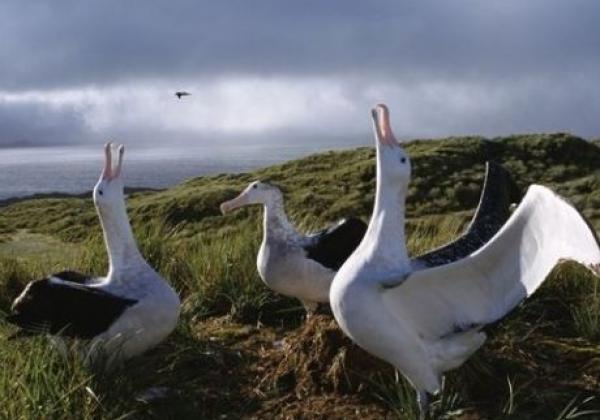 albatrosse.jpg