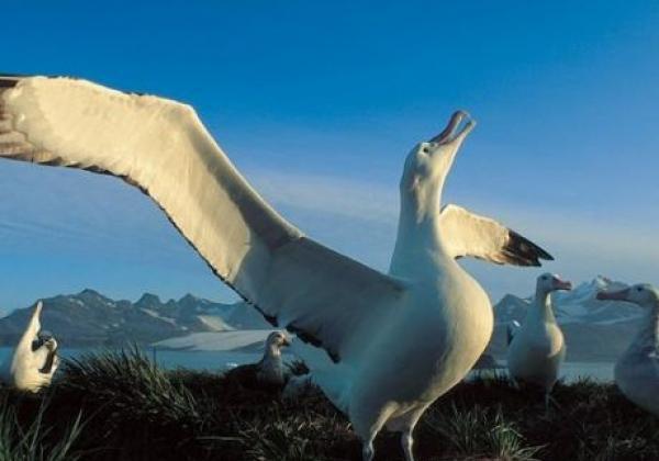 albatross-reckt-den-kopf.jpg