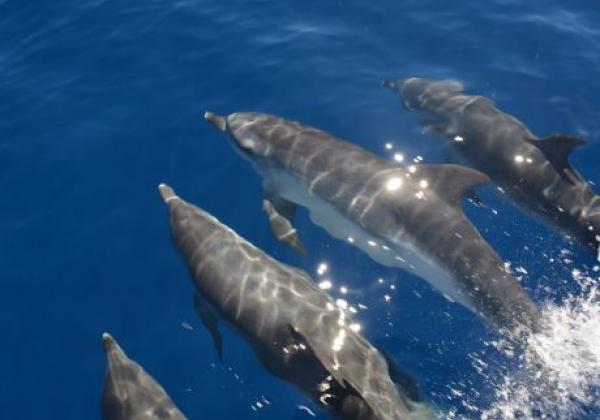 mehrere-delfine.jpg